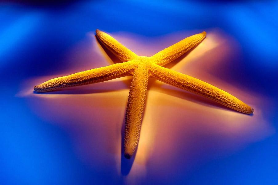 Ramon Vaquero-Starfish logo- fotografos Vigo